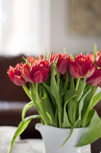 kompozycja tulipanów